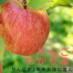 りんご 旬