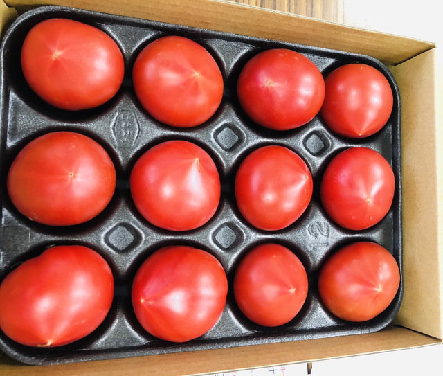 あま~い「フルーツトマト」になれる糖度 普通のトマトとの違いは?後悔しないおすすめフルーツトマト